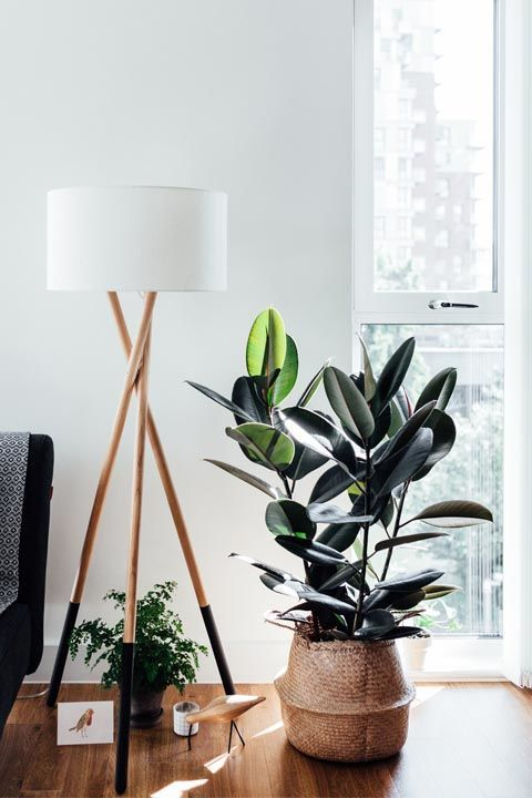 Leo: Rubber Tree You gravitate towards being the center of attention, just like rubber trees. They tend to make a statement in any room due to their size and the same can be said about your outgoing personality. Check out more houseplants for your zodiac sign!