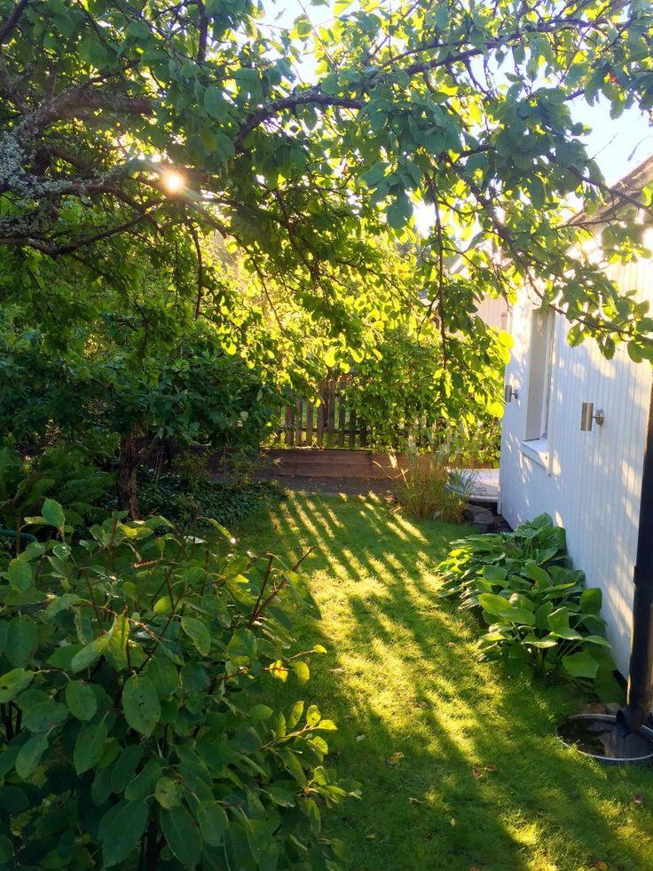 """Lummig insynsskyddad hörntomt som sträcker sig runt tre sidor av huset och som fångar solens strålar hela dagen. Trädgården är uppdelad i flera """"rum"""" som hålls samman av grusgångar och gräsmatta. Utanför vardagsrummet finns en trädäckad uteplats både med och utan tak. Utanför köket finns en uteplats som är perfekt för tidig vår. Vidare finns en sandstrand med utedusch där solen skiner från tidig eftermiddag till kvällen. Det finns också ett påbörjat projekt: en månskensveranda som är tänkt…"""