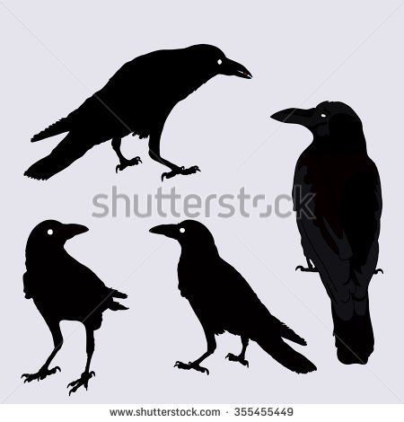 silhouette of a crows in different positions. vector illustration. black ravens on grey.