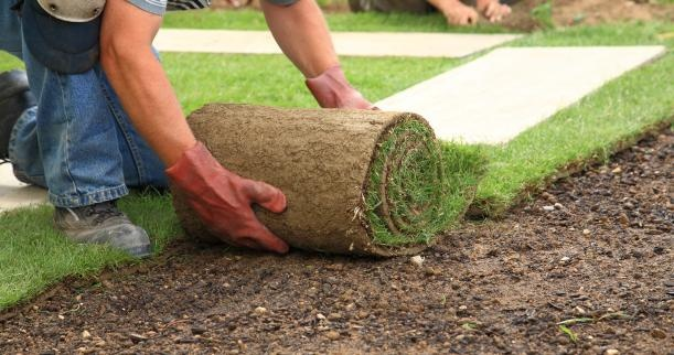 Good tips and advice for putting down sod. We will be working on this project soon.