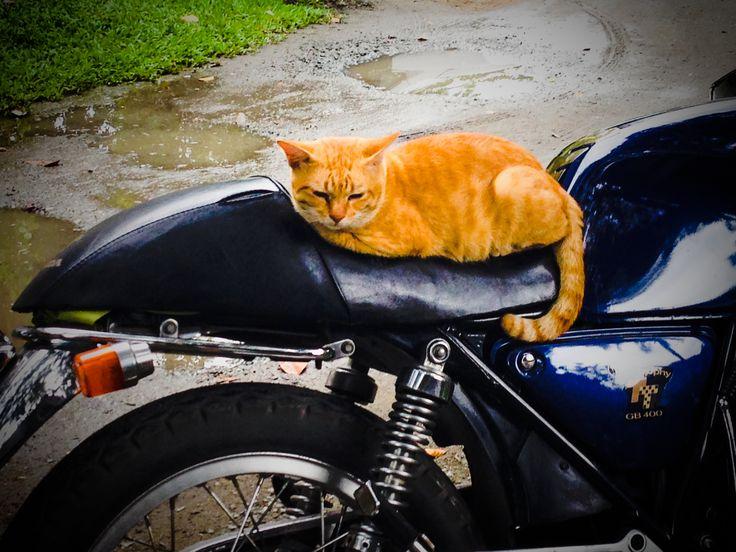 CAT BIKE !!! .....Honda GB 400 Thailand