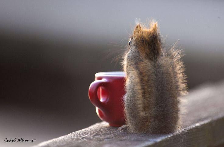 Утренний Кофе — Сайт для любителей белок