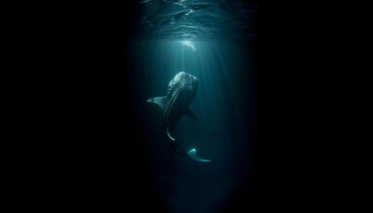 15 снимков, после просмотра которых ты в воду ни ногой. Вы купайтесь, а я за вещами присмотрю...