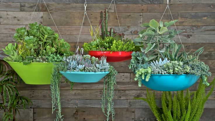 Low maintenance happy colors land scaping around for Garden scaping