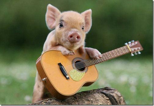 Le cochon nain : l'animal le plus mignon de la terre (et de l'espace). #Puppie