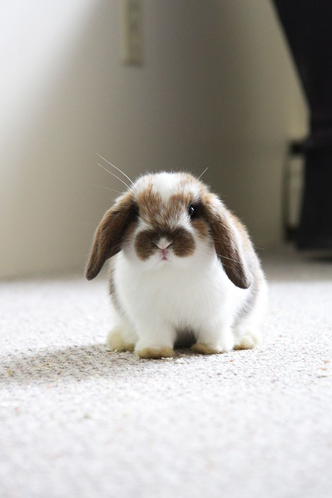 I want a pet bunny that just hops around the house and is litter box trained...,:)