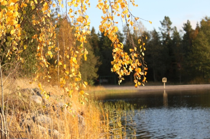 Vecka 41 - Höstfärger i oktober. Foto: Niklas Falk