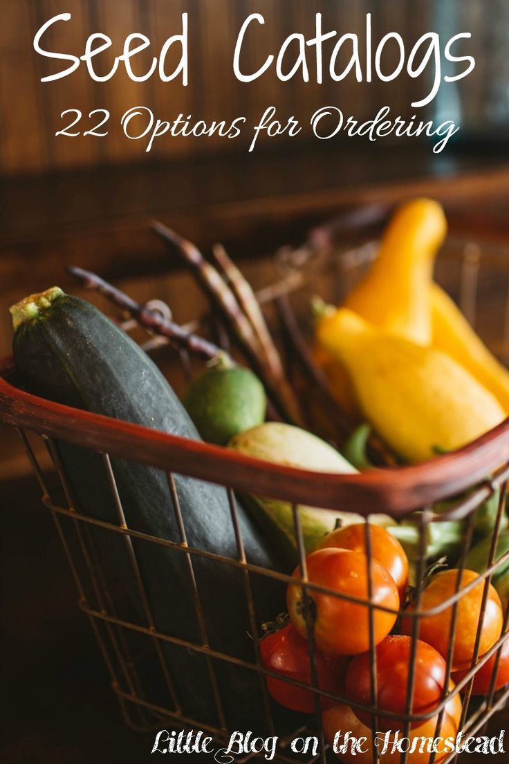 259 best Gardening images on Pinterest | Balcony, Gardening and Veggies