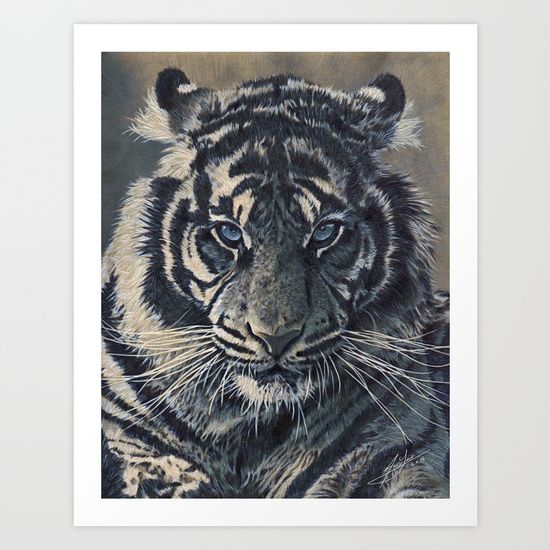 This is my latest graphite pencil and ink pen study of a tiger. The drawing was created on a sheet of cardboard.<br/> <br/> Tiger, drawing, pencil drawing, pen and ink drawing, animal illustration