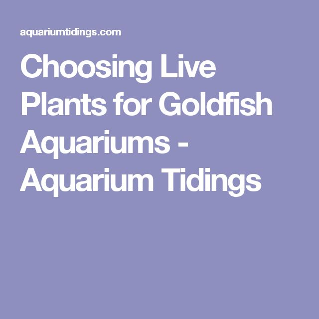 Choosing Live Plants for Goldfish Aquariums - Aquarium Tidings