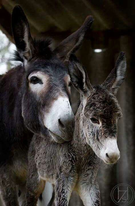 Beautiful Donkeys!