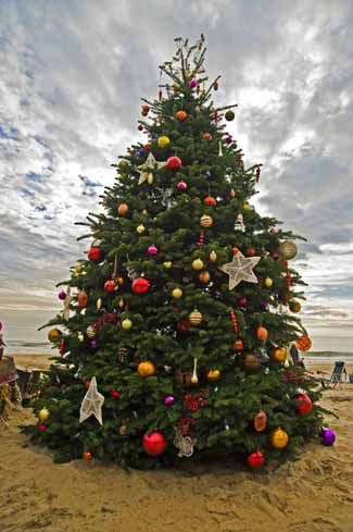 Christmas Tree Lighting Festivities at the Beach | Newport.