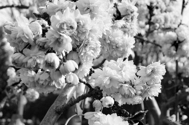 Photography - Copenhagen spring - By Kia Lange
