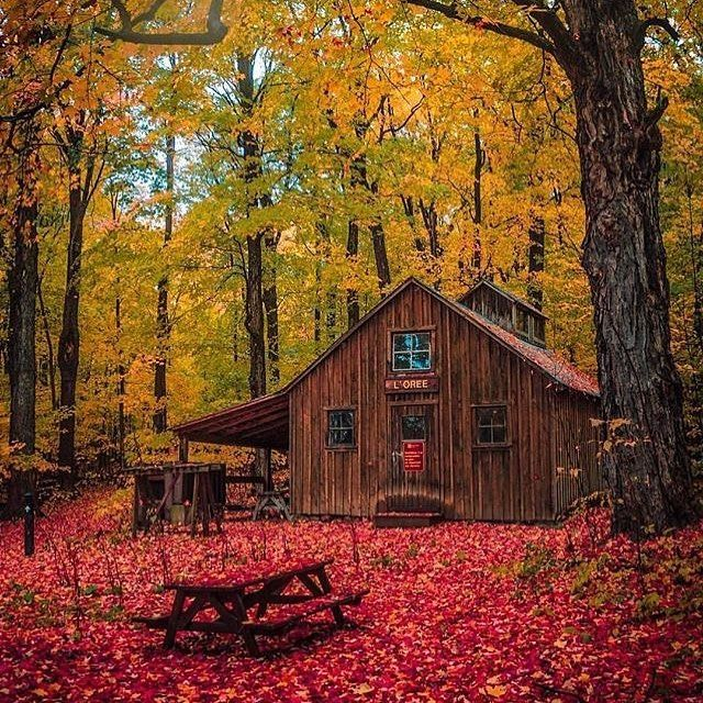 A cabin in Quebec's Parc national d'Oka 30 minutes from Montreal.  by @edauwd. . . #vancityhype #getoutside #discoverglobe #beautifuldestinations #socialrealtor #socialmedia #yvrre #realtor in #yaletown #vancity #vancouverrealestate #theevlist #wp #linkedin #instahub #instagood #love #engelvolkers #vancouver #montreal #montréal #quebec #québec #canada #fall #fall2017 @mtlblog