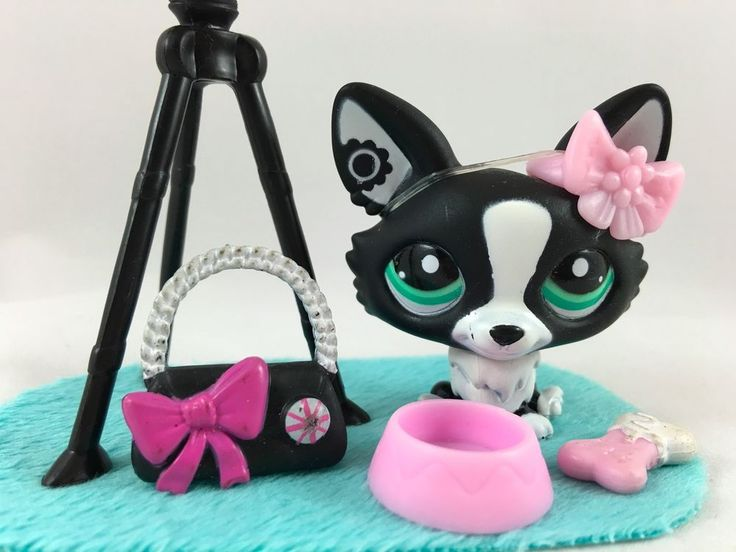 Littlest Pet Shop RARE Black & White Corgi #2245 w/Camera & Accessories #Hasbro