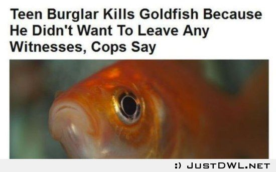 Teen burgler kills fish: Fishs can talk