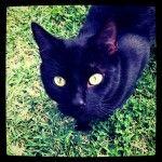 LOST – Black CAT – North Avalon, Sydney  NSW  2107