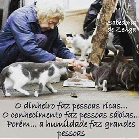 Concordo! <3 #petmeupet #cachorro #gato #amoanimais