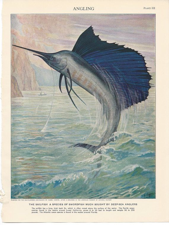 1929 Antique Fish Illustration - Color Lithograph - Sailfish - Deep Sea Angling - Fishing on Etsy, $9.00