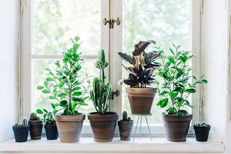 Inred dina fönster med olika växter i olika storlekar