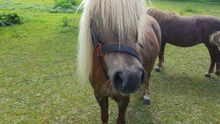 Pony - Göhren-Lebbin