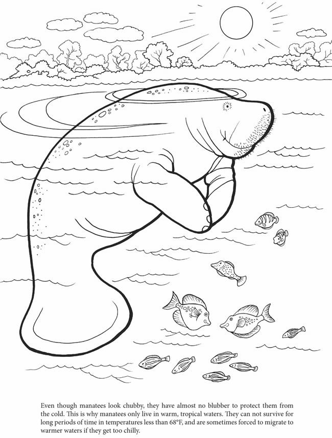 manatee free coloring pages - photo#5