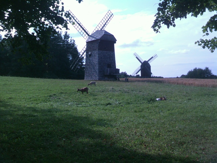 Windmills near Wiatraki, in the Open-air museum of folk architecture in Olsztynek.
