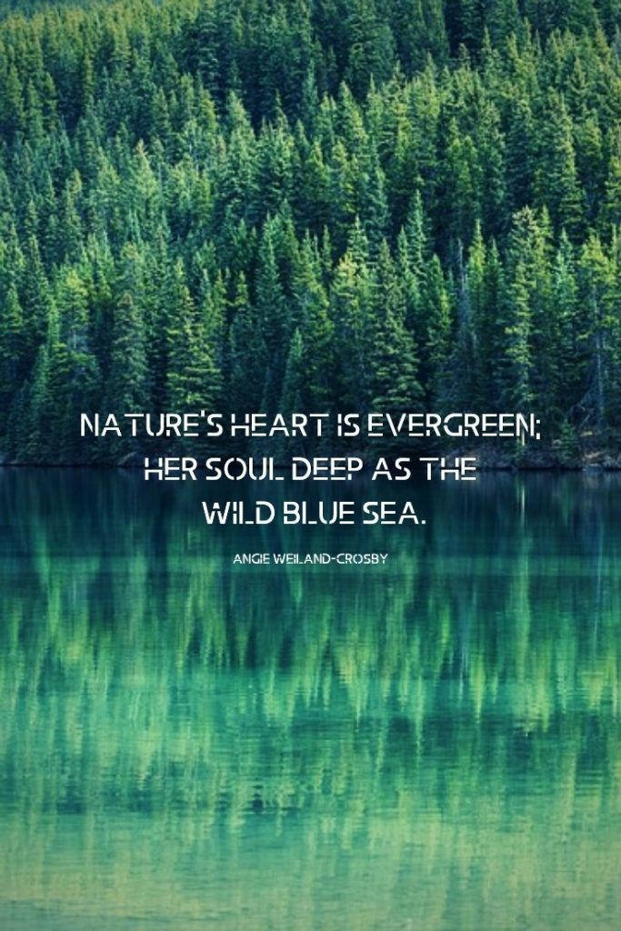 Nature Quotes For The Wandering Soul Nature Quotes Trees Nature Quotes Water Reflection Quotes