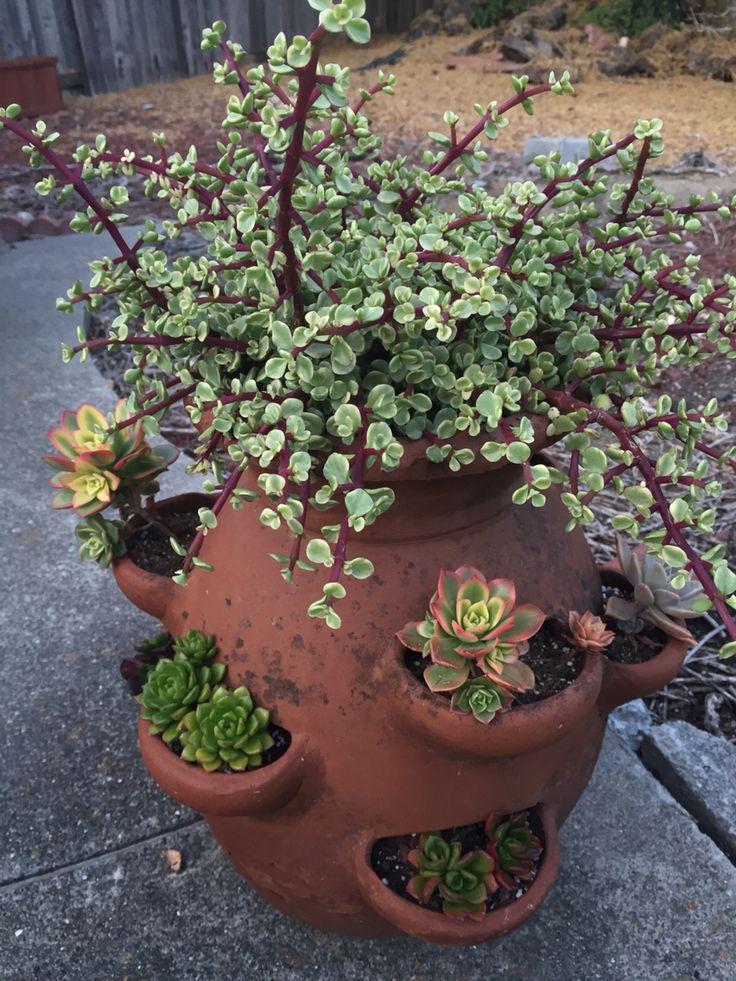 Strawberry pot full of succulents.