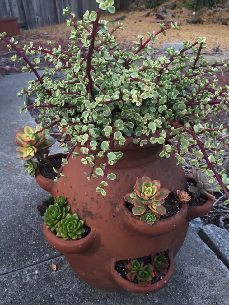 Strawberry pot full of succulents.
