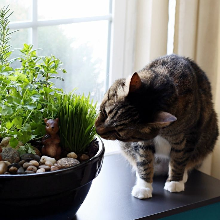 DIY: indoor potted cat garden. Many houseplants and flowers can be toxic to cats, but some are safe and will give your cats entertainment.