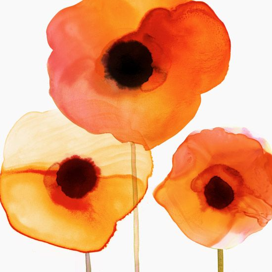 Margaret Berg Art: Orange+Poppy+Trio