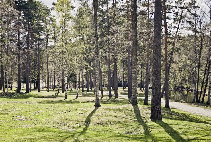 Kopparberg forest.