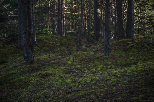 Karelian forest_06 by Aderhine Woods in Karelia, Russia August 2015 © Aderhine photography