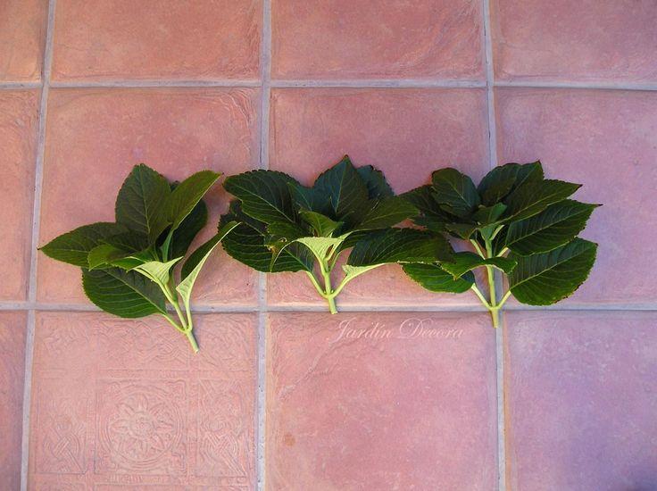25 melhores ideias de hort nsias de poda no pinterest for Jardinera palet bricomania