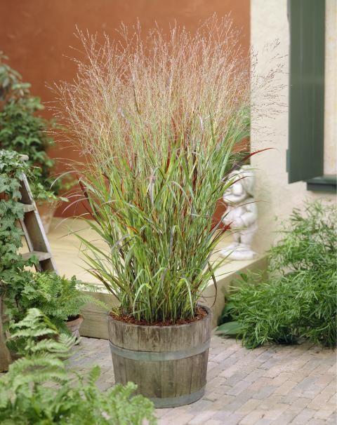 7 best Garten images on Pinterest Terrace, Garden plants and Home - gartenplanung software kostenlos deutsch