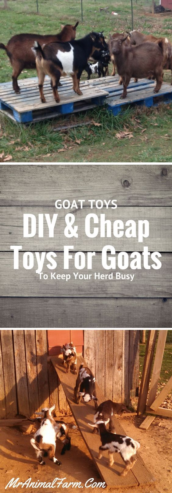 Goat toys!  DIY and Cheap toys for your goats to keep them busy and entertained.