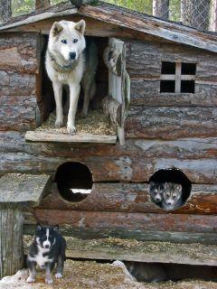 I love this Husky cabin!