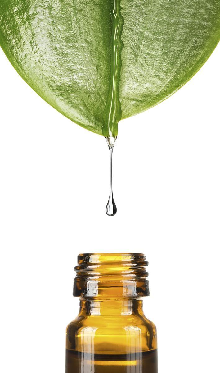"""L'arbre à thé, aussi appelé """"tea tree"""", pousse en Australie. L'huile essentielle extraite traite notamment les infections génitales, ORL ou les maladies de peau."""