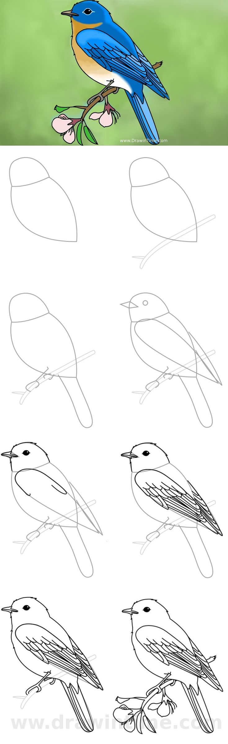 Tutorial: How to Draw a Bird EASY  http://drawintime.com/how-to-draw-a-bird/