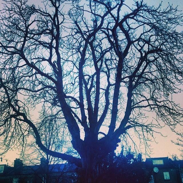 #treeoflaxmi perfect dawn. 07.04.03.03.14