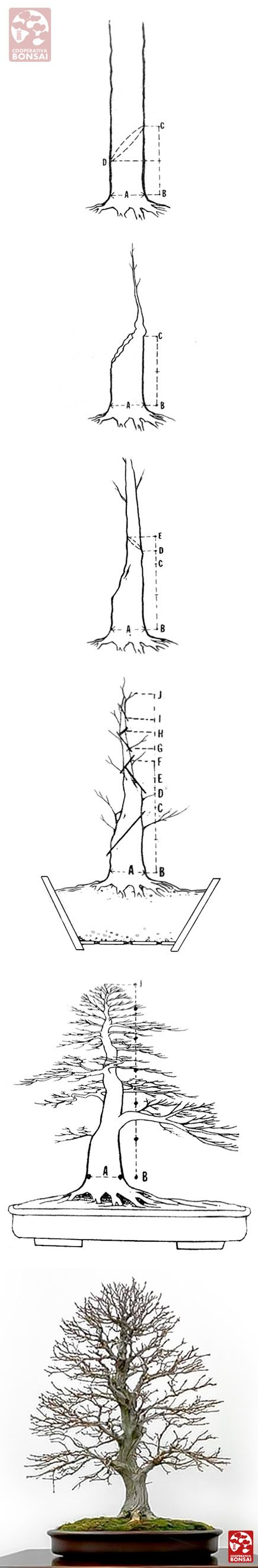 Radical pruning bonsai guide More Pins Like This At FOSTERGINGER @ Pinterest