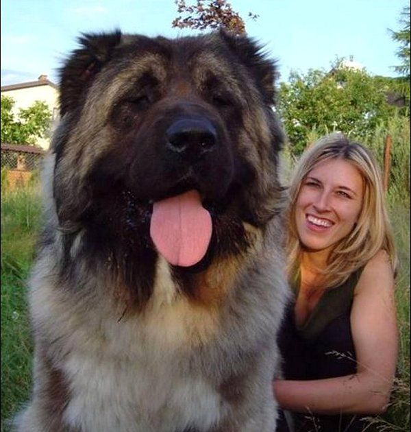 Dog looks huge. Maybe the girl is just small? YOU BE THE JUDGE?