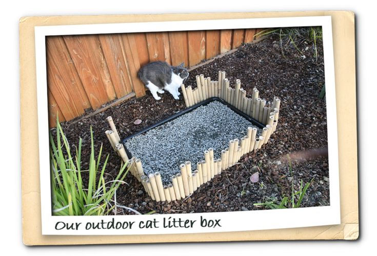 Newest Outdoor Cat Litter Box I Like This Possibly
