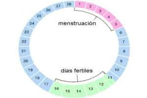 Cómo tratar la Menstruación irregular o aumentar su intensidad de forma natural con algunos Remedios Caseros. SIGUE LEYENDO EN: http://alimentosparacurar.com/remedios-caseros/n/899/remedios-naturales-para-la-menstruacion-irregular.html