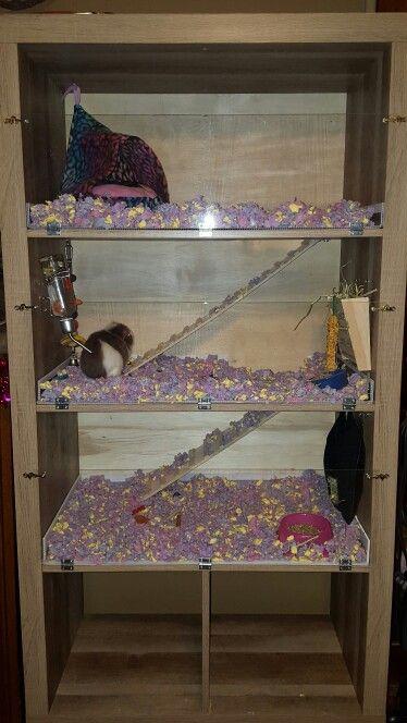 Homemade guinea pig cage Made from 8 cube storage shelf, coroplast and plexiglass. Three happy piggies.