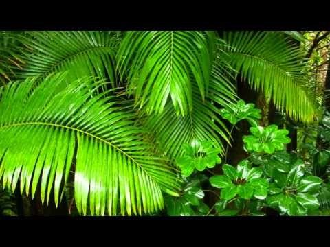 Ametist Terapi Yağmur Ormanı Sesleri - YouTube