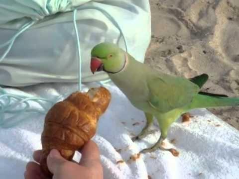 Кормление попугая на пляже Al Mamzar, Dubai