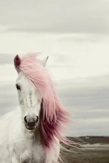 Pink mane.