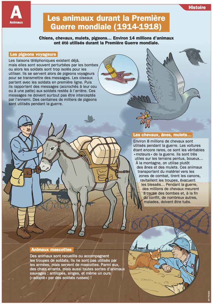 Les animaux durant la Première Guerre mondiale (1914-1918)